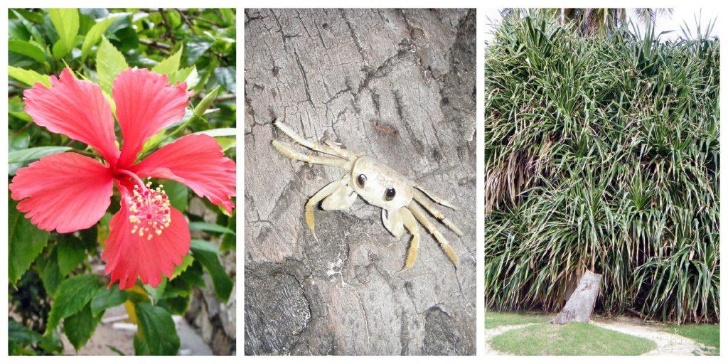 Dominikanische Republik - Natur