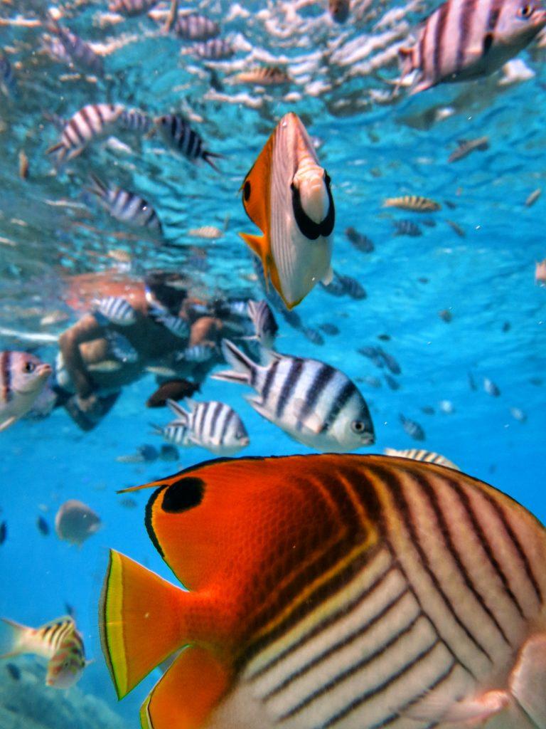 Moorea Fische