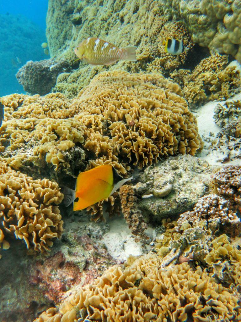 Moorea Unterwasserwelt