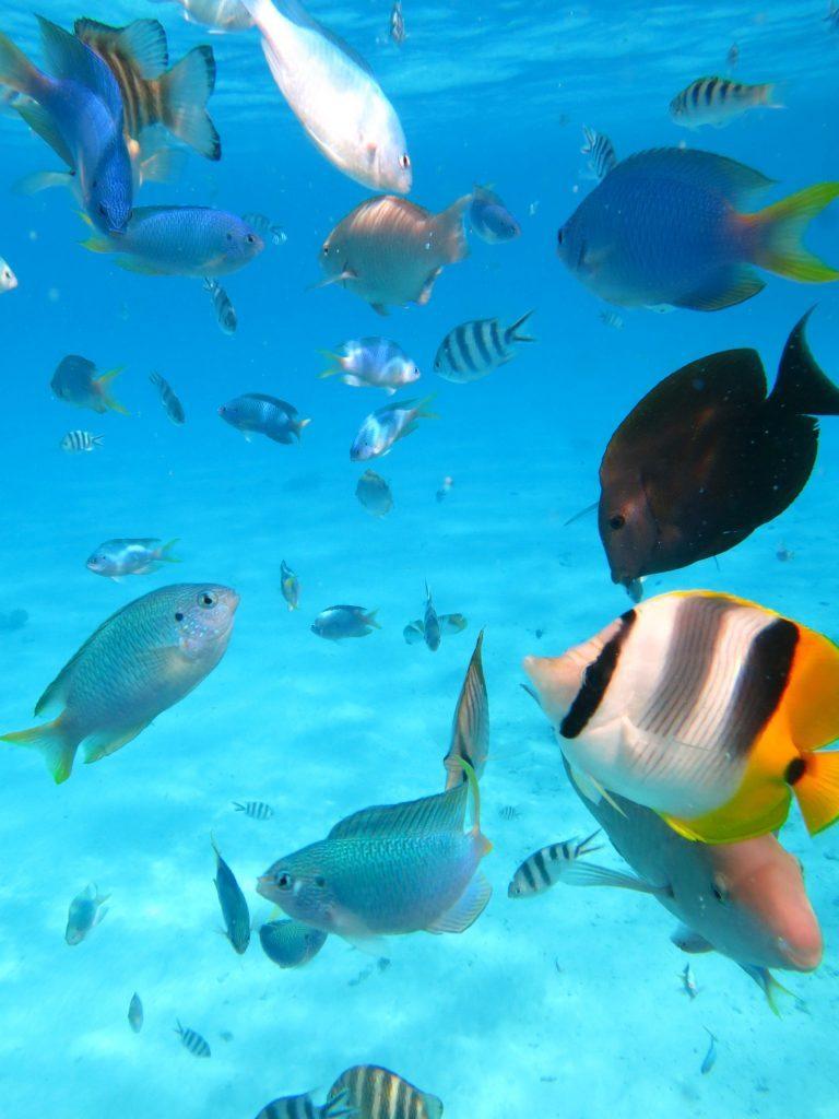 Unterwasserwelt Moorea - Südsee Tahiti - Salty toes Reiseblog