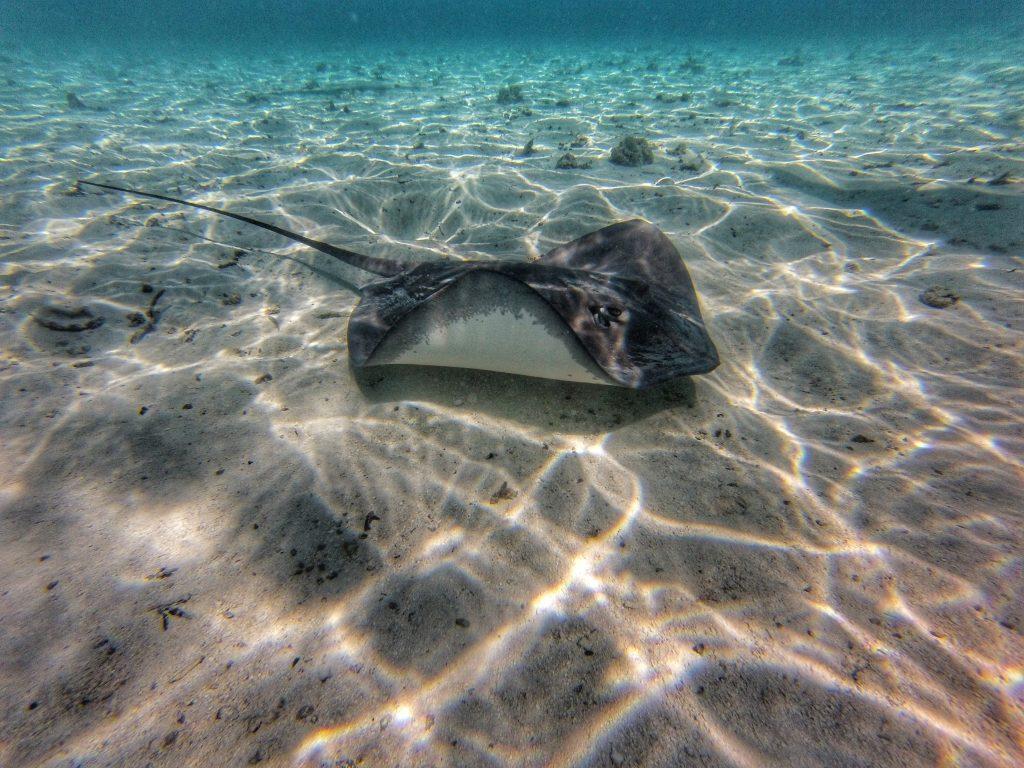 Bora Bora - Manta Rochen - Reisetipps - Südsee Salty toes Reiseblog