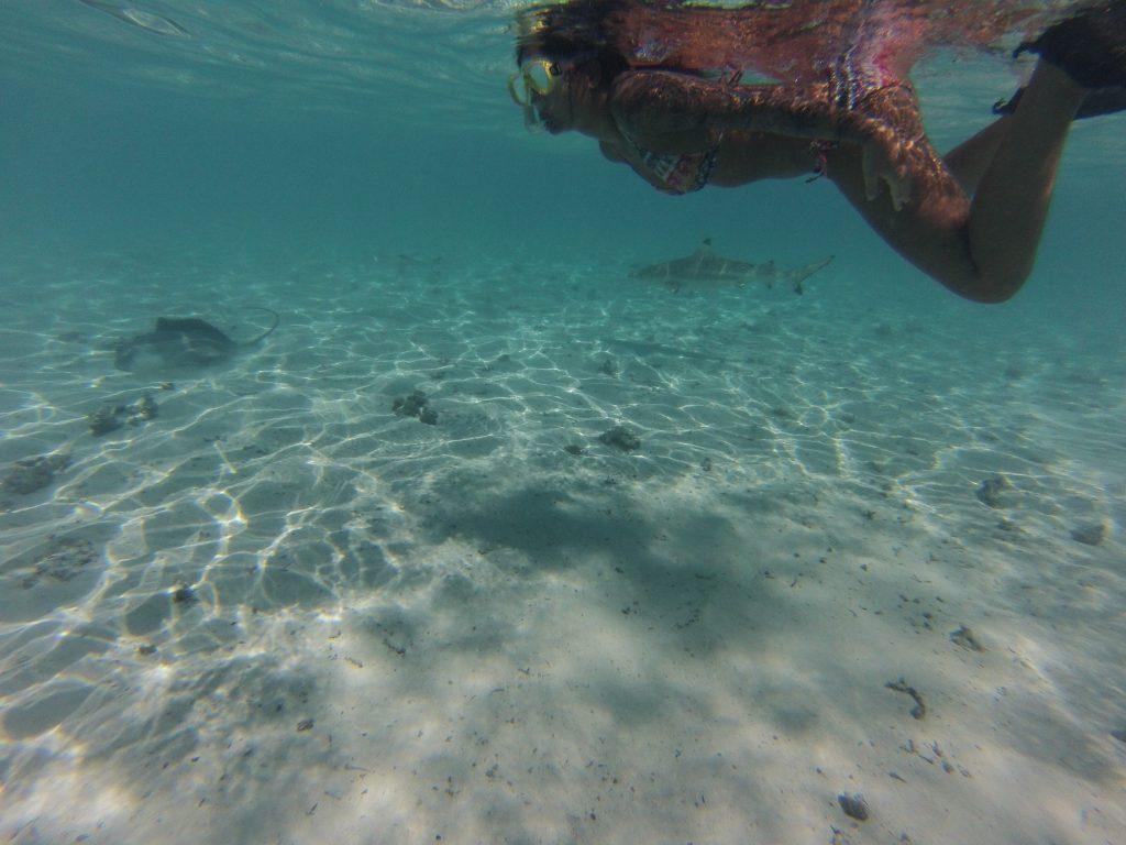 Haie Bora Bora - Reisetipps - Südsee Salty toes Reiseblog