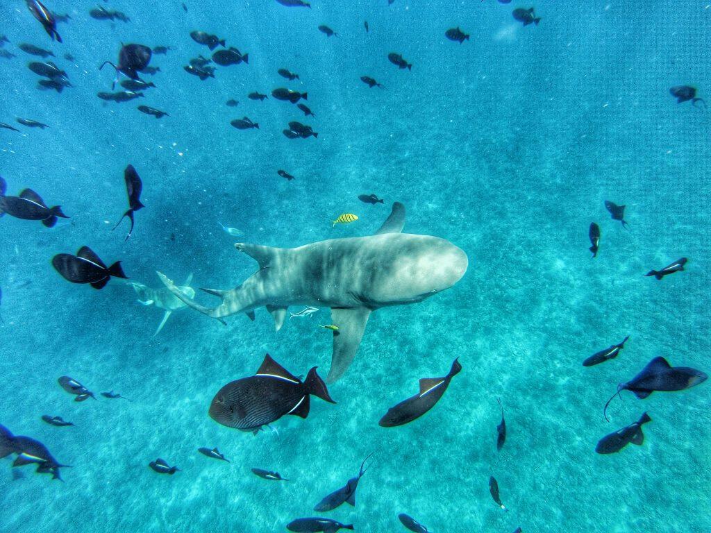 Bora Bora - Reisetipps - Südsee Salty toes Reiseblog