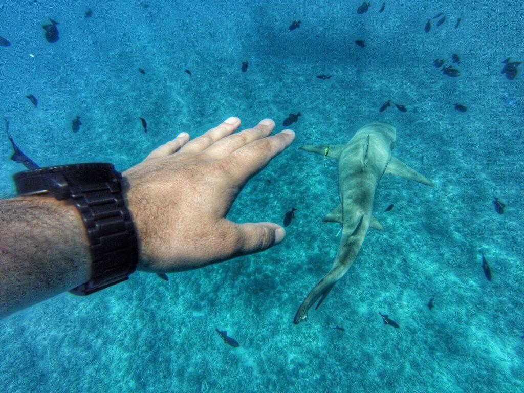 Bora Bora Haie