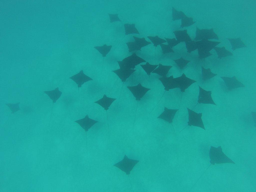 Bora Bora - Unterwasserwelt