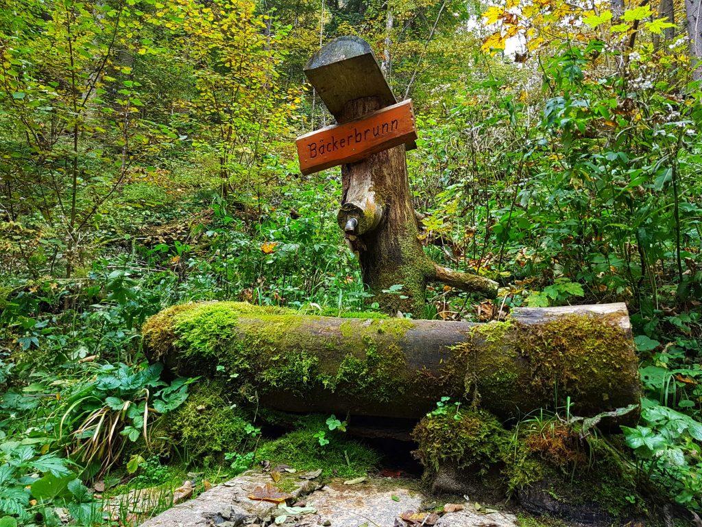Naturpark Ötscher Tormäuer (57)-min