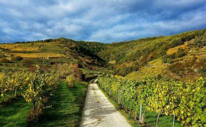 Wachau - Niederösterreich - Salty toes Reiseblog