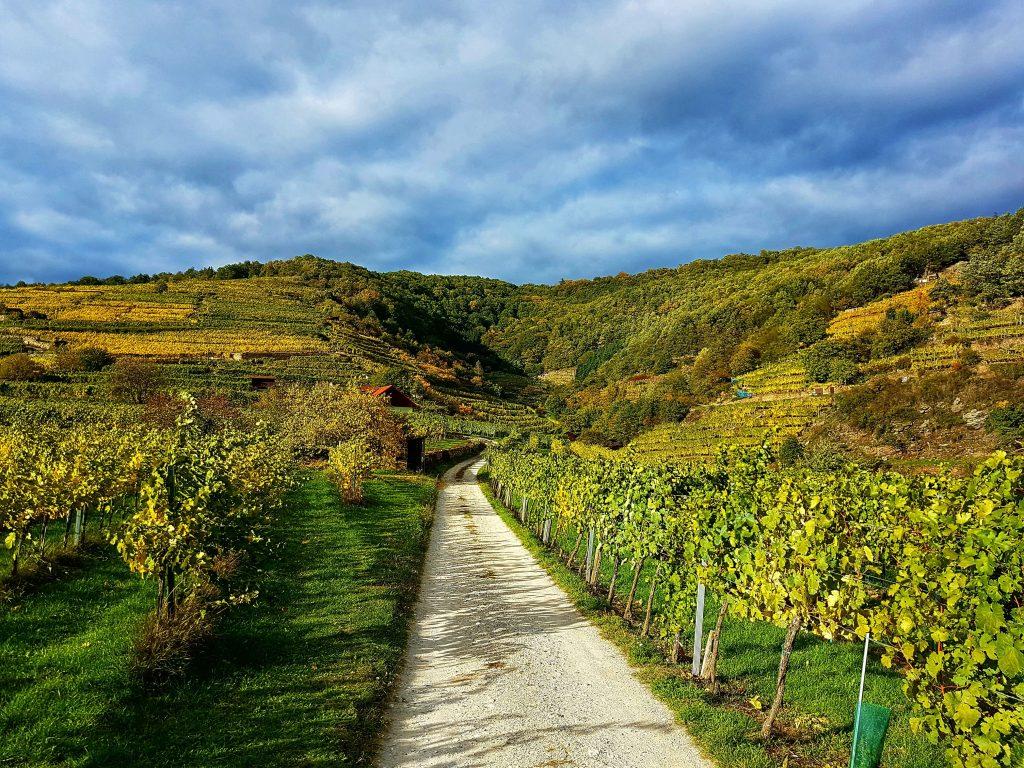 Wachau - Die schönste Wanderung in Niederösterreich