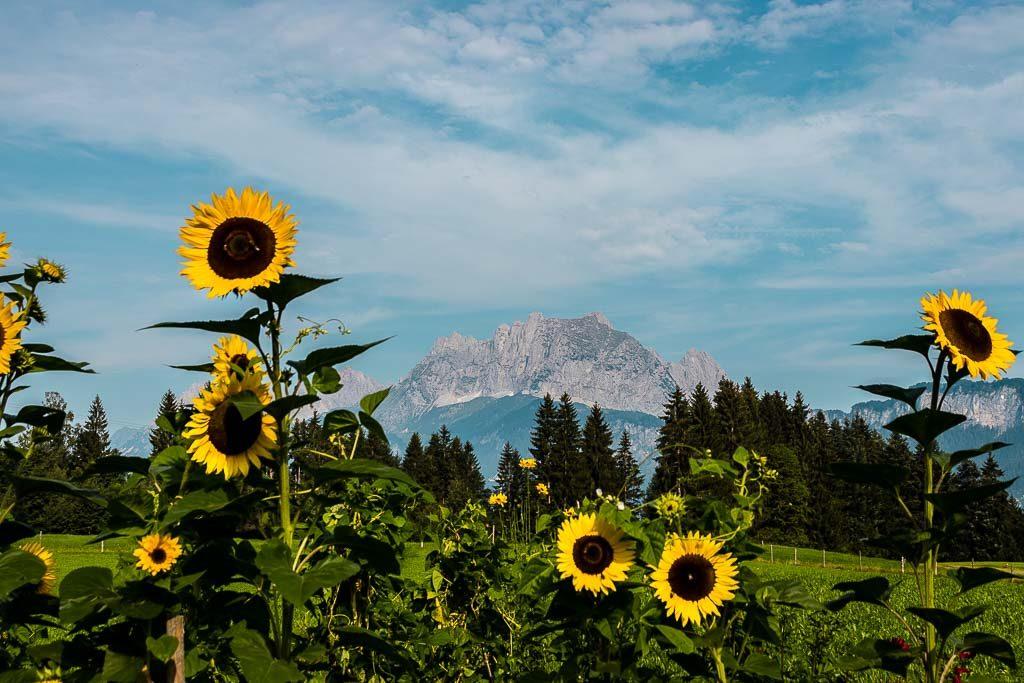 Koasa Trail - Weitwanderweg in St. Johann in Tirol